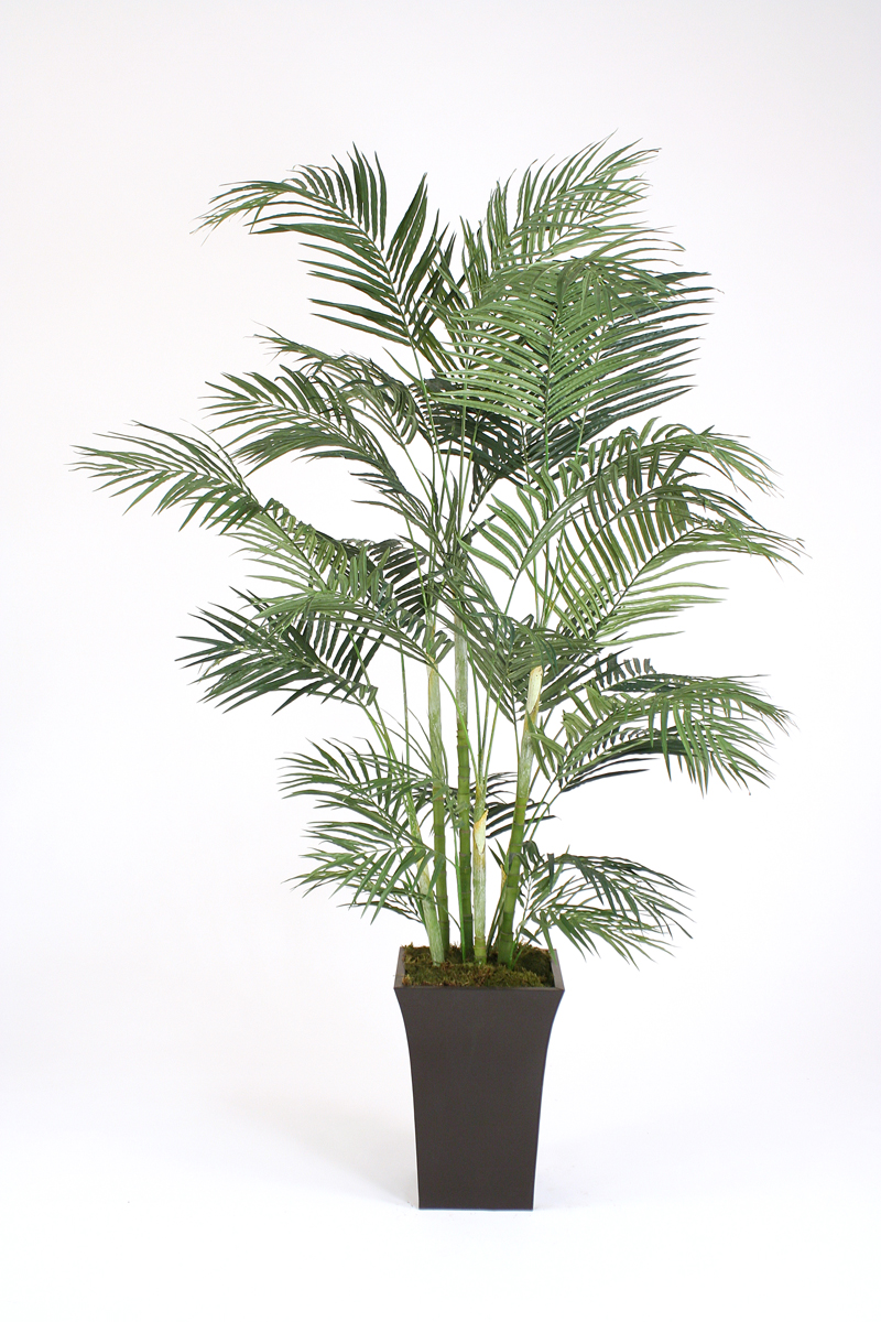 7' Areca Palm Tree in Tall Flared Graphite Metal Planter