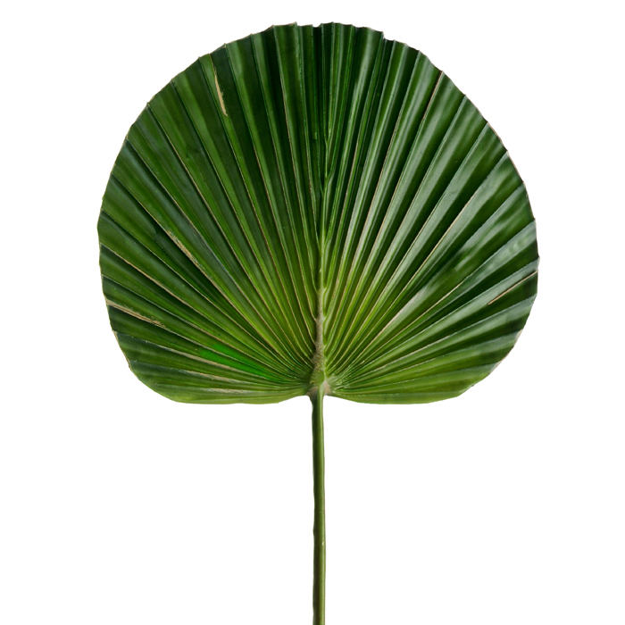 Small Fan Palm Leaf
