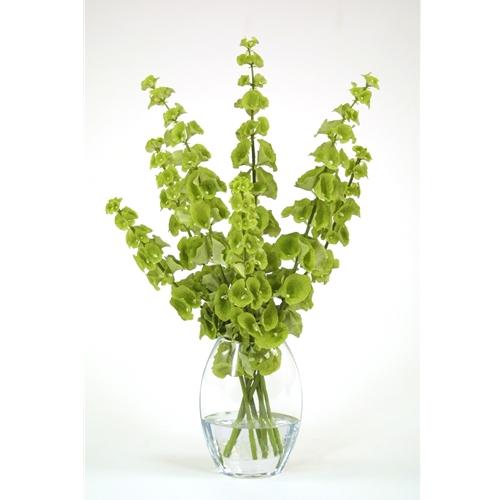 Waterlook 174 Silk Green Bells Of Ireland In A Glass Vase