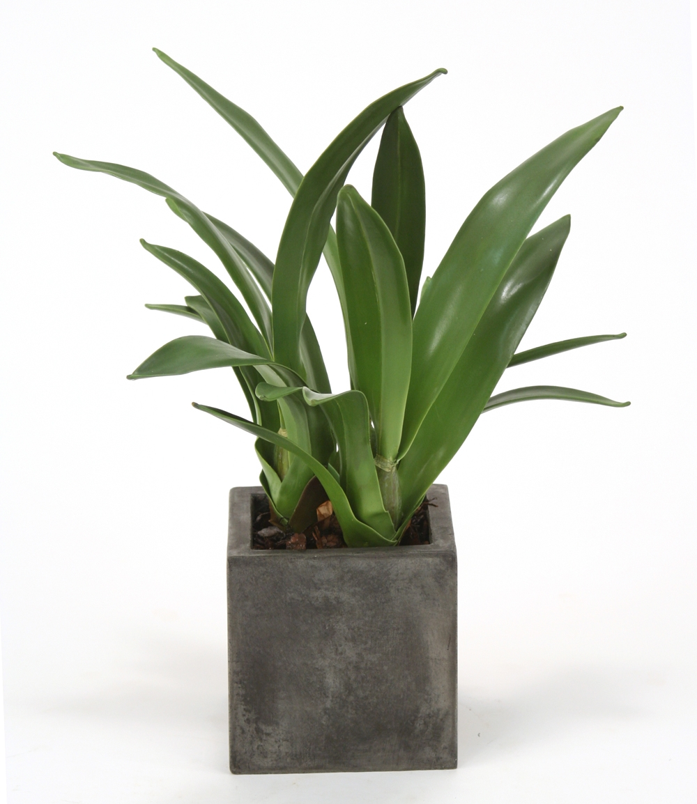 Silk Orchid Blades Desk Top Plant In Planter Free
