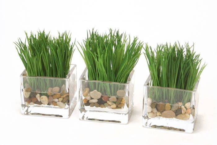 Waterlook (R) Grass in a Small Glass Square Vase (sold in multiples of 3)
