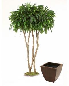7\' Canopy Mango Tree in Bronze Metal Contempo Planter | Free ...