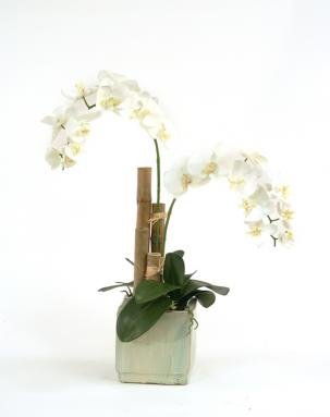 Silk Cream-White Phalaenopsis Orchids in Fire Glazed Beige Ceramic Planter