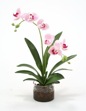 Waterlook ® Silk White Purple Phaleanopsis Orchids in Clear Cylinder Glass