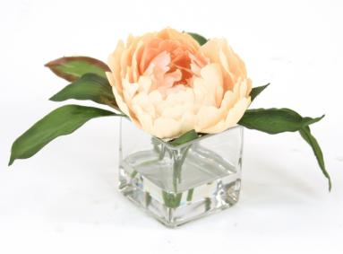 Waterlook ® Antique Peach Peony in Square Glass (Pack 3)