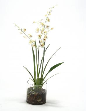 Waterlook ® White Brown Dancing Orchids with Foliage in Cylinder Glass Vase