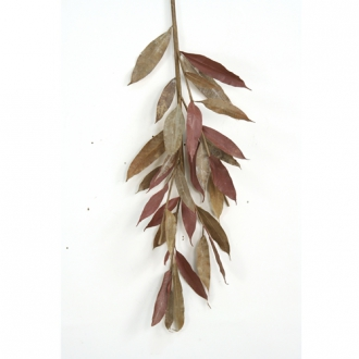 42' Natural Brown Myrtle Branch