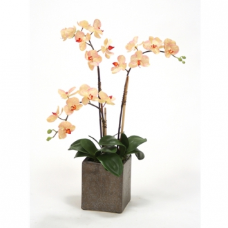 Cream-Pink Silk Phaleanopsis Orchids in Etched Crystal Bronze Cube