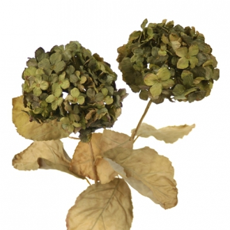 DIY Flower 26'L Everlasting Green Artificial Hydrangea with 3 Leaves