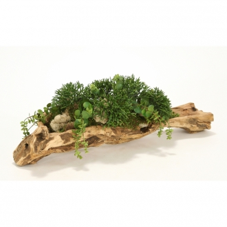 Mixed Succulent Greenery in Natural Wood Tray