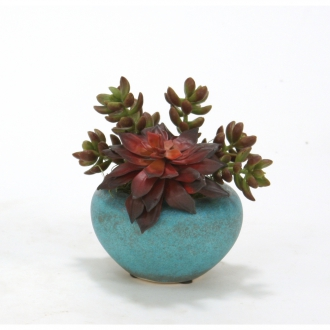 Mixed Succulents in Small Turquoise Pots (pack 3)