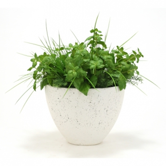 Silk Basil, Fern and Grass in Gray-Washed Oval Concrete Urn