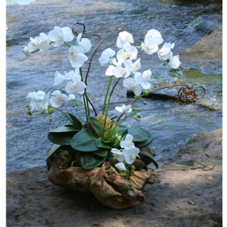 Silk Cream White Phalaenopsis Orchid Garden with Driftwood Nestled in a Rustic Wood Basin