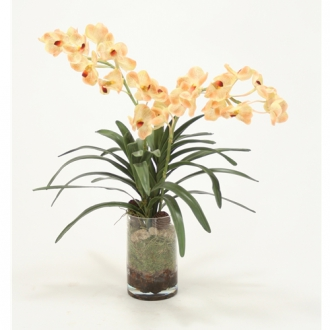 Waterlook ® Champagne Vanda Orchid Silk Floral Arrangement with Orchid Bark in Clear Glass