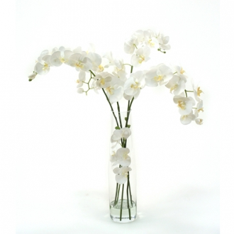 Waterlook ® Silk White Phaleanopsis Orchids in Clear Inverted Glass Cylinder