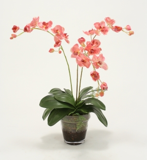 Waterlook® Phaleanopsis Orchids with Orchid Foliage and Fern in Glass Pot