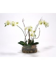 Waterlook (R) Cream-Green Phalaenopsis Orchid in Oval Glass Bowl w/ Rocks