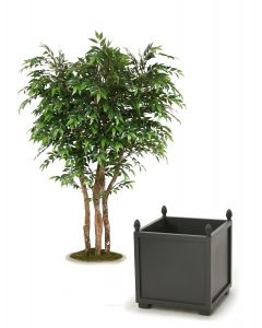 6' Ruscus Tree in Gray Wooden Planter with Finials