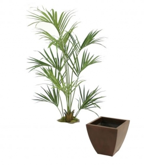 Kentia Palm in Bronze Metal Contempo Planter