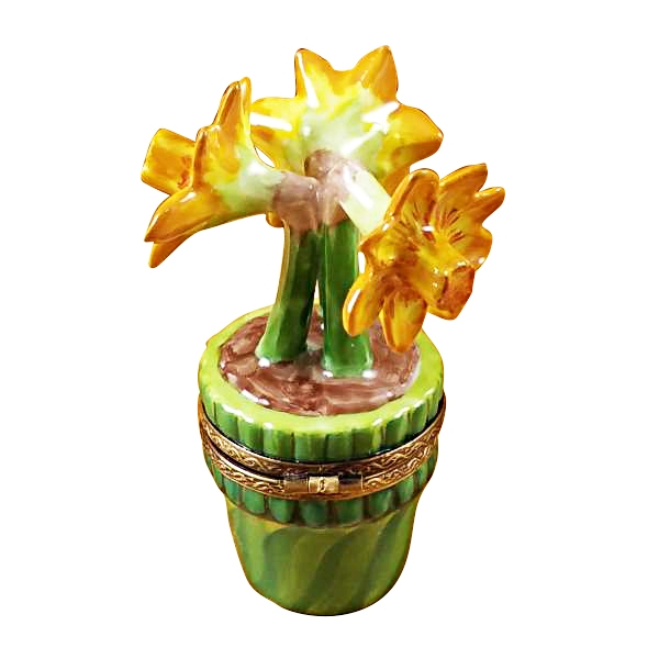 Jonquils in green pot