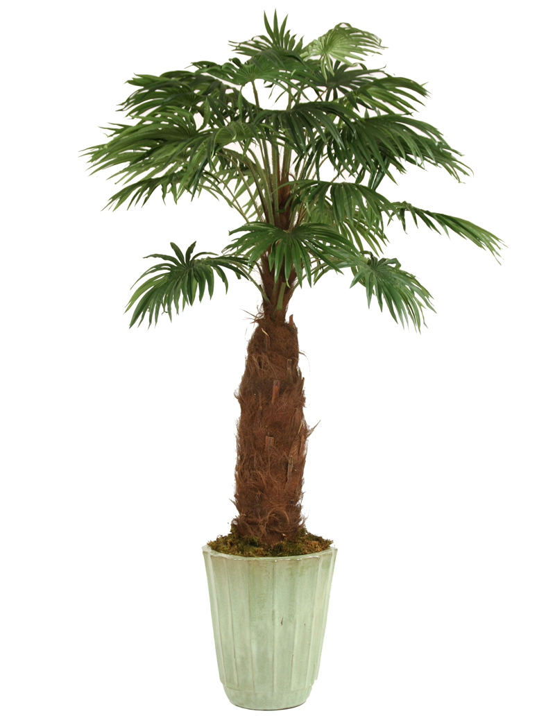8' Fan Palm in Large Frosted Green Glazed Fluted Stoneware Planter