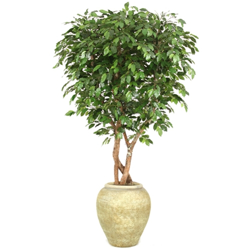 7 Canopy Ficus Tree in Tall Biscotti Stone Water Jar