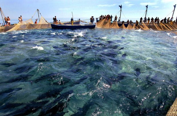 Sorrento fish festival, Italy
