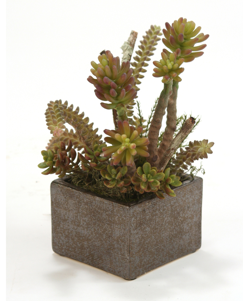 Faux Succulents with Desert Boxwood in Small Bronze Planter