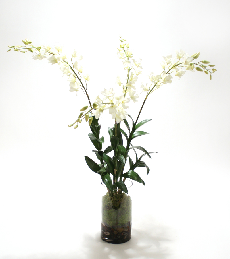 Waterlook ® Silk White Dendrobium Orchid Plant with Moss in a Glass Cylinder