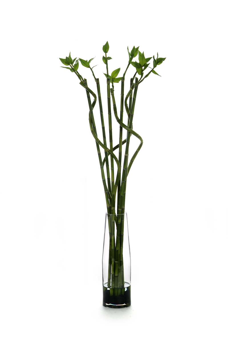 Waterlook Silk Lucky Bamboo Tall Glass Cylinder