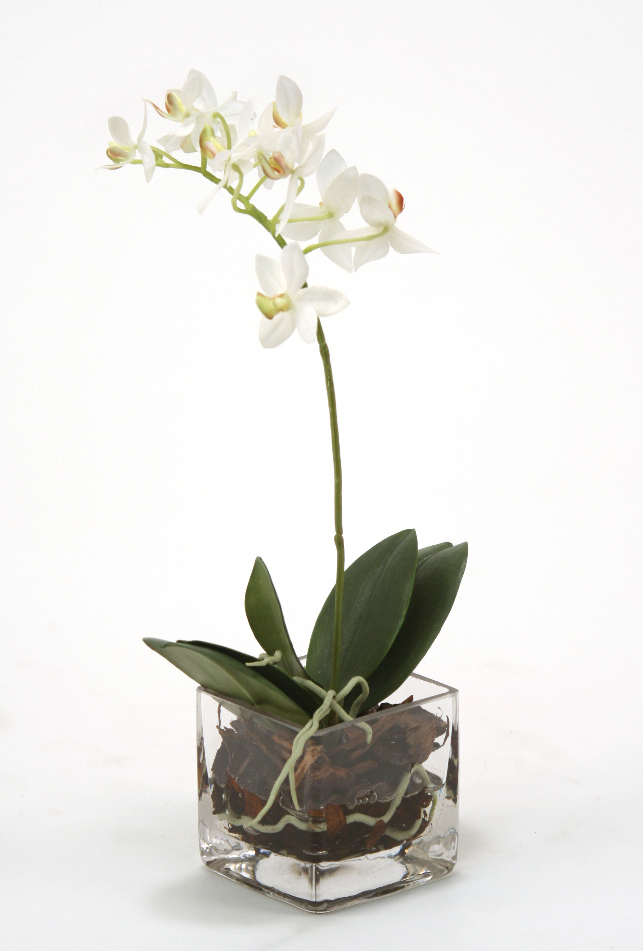 Waterlook silk cream white phaleanopsis orchid in square glass waterlook silk cream white phaleanopsis orchid in square glass vase reviewsmspy