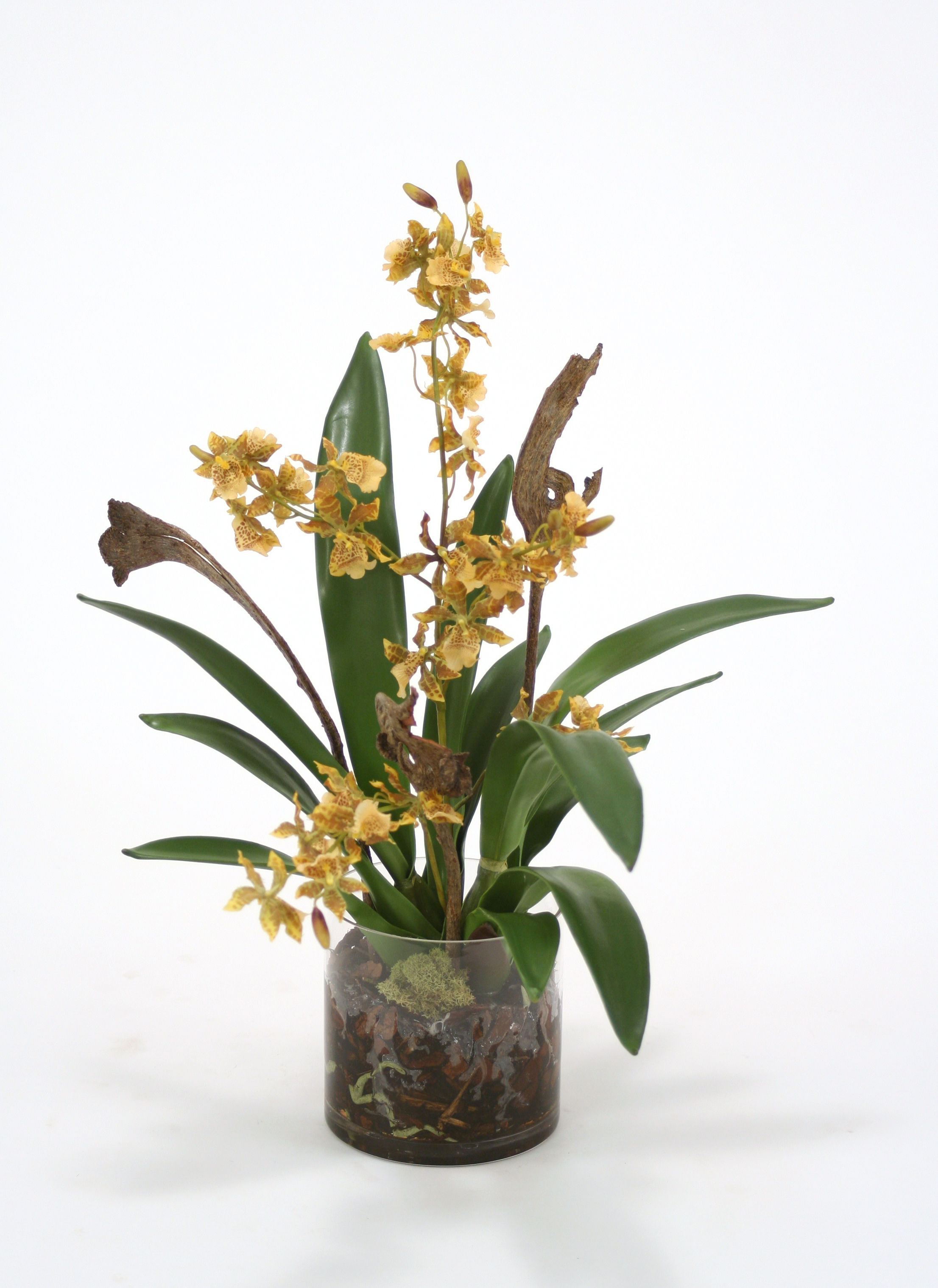 Waterlook ® Gold Green Oncidium Orchid Garden Mix in Clear Cylinder Glass Vase
