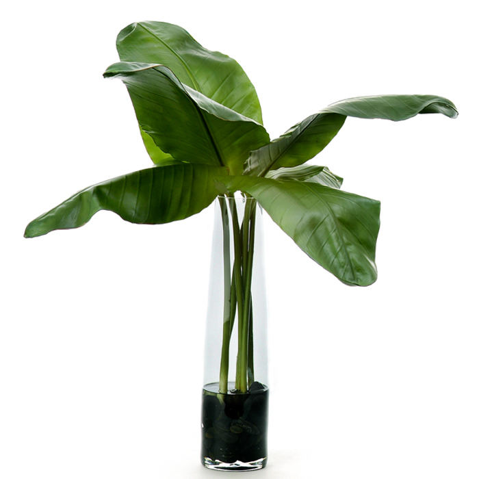 Bird of paradise leaves in cylinder free shipping in usa 1001shops bird of paradise leaves in cylinder mightylinksfo