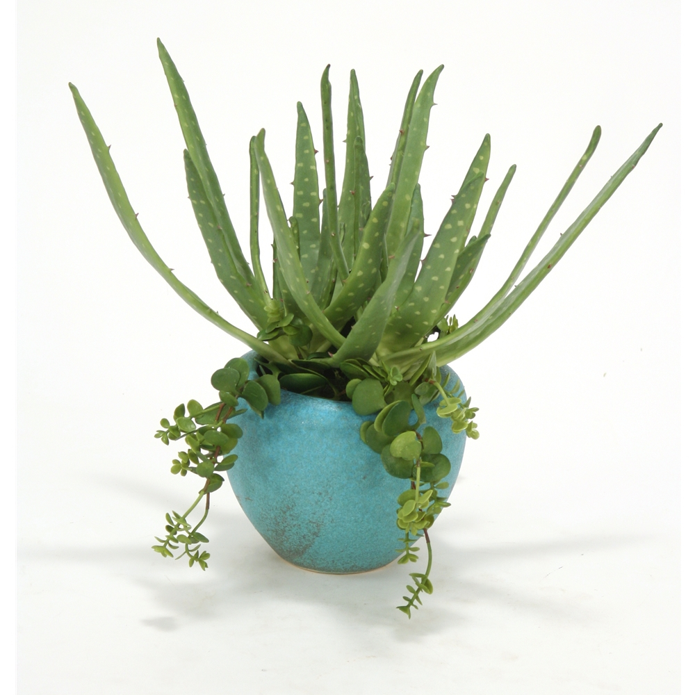 Aloe and Hanging Succulents in Large Turquoise Planter (Pack 2)