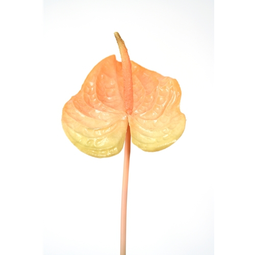 DIY Flower Large Peach Anthurium with Natural Stem