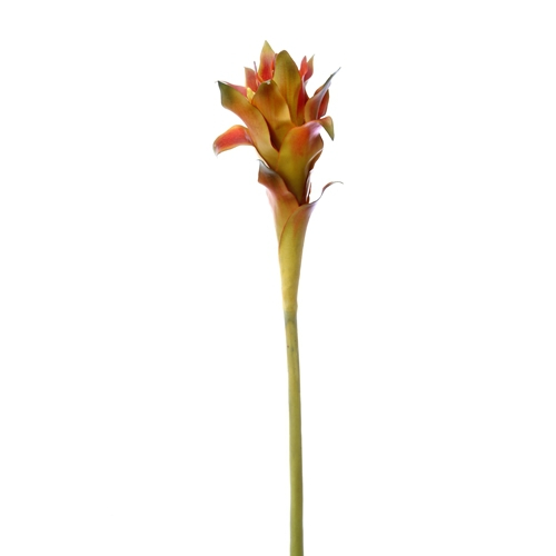 DIY Foliage 36'L Artificial Large Red-Green Guzmania Stem (Pack of 12; 72/Case)