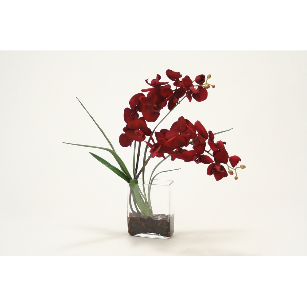 Red Velvet Phalaenopsis Orchid In Glass Vase Free