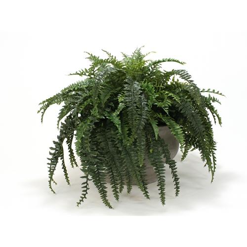 Silk boston fern in oval anthracite concrete planter free shipping silk boston fern in oval anthracite concrete planter mightylinksfo