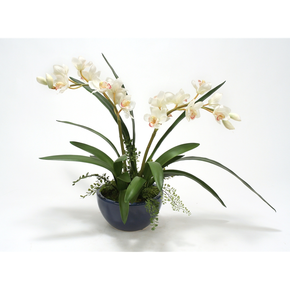 White Cymbidium Orchid Plant in Navy Earthenware Bowl