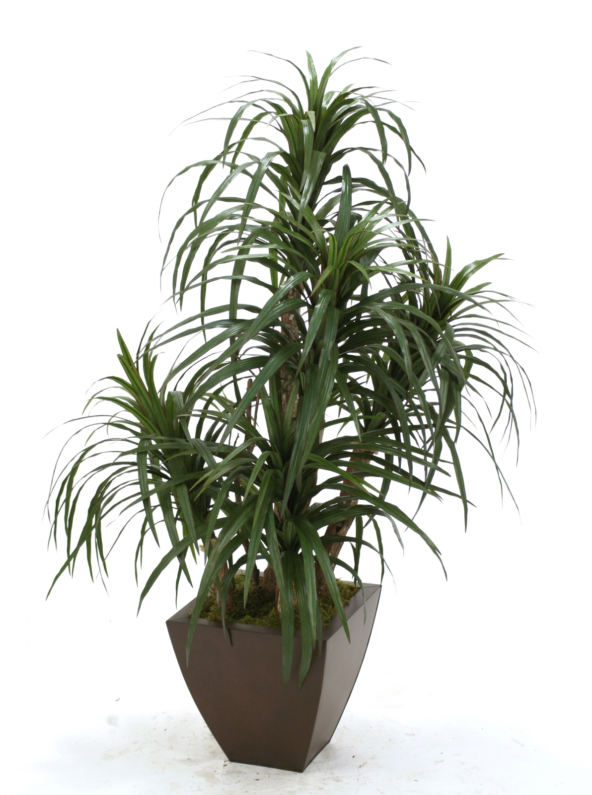 Silk Dracaena Marginata Floor Plant in Planter