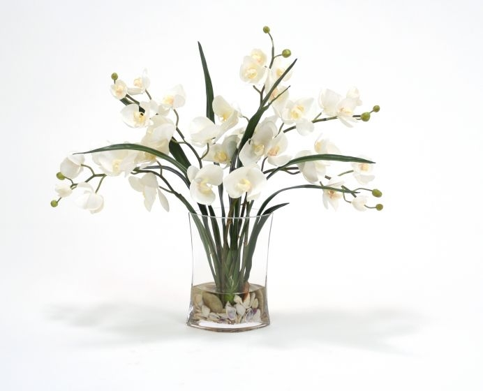 Waterlook R Cream Phalaenopsis Orchids And Foliage In Narrow Oval