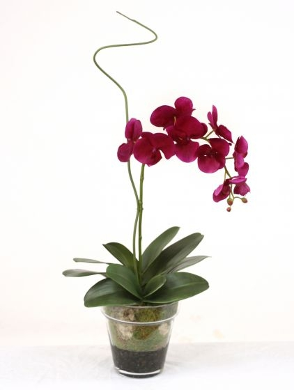 Waterlook R Violet Phaleanopsis Orchid With Whip Grass In Glass Flower Pot Vase Free