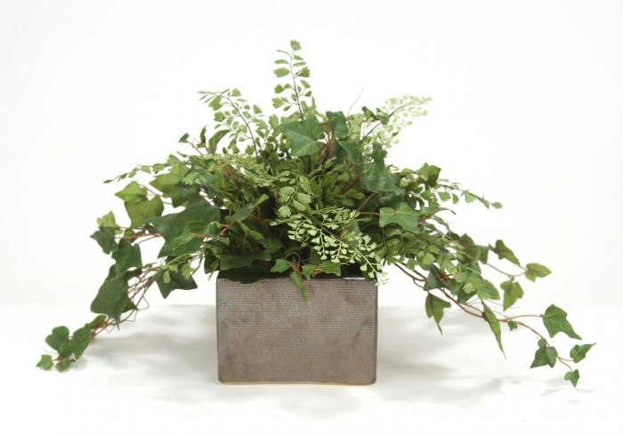 Nice MountaIn Ivy And Maiden Hair Fern Desk Top Plant In Planter ...