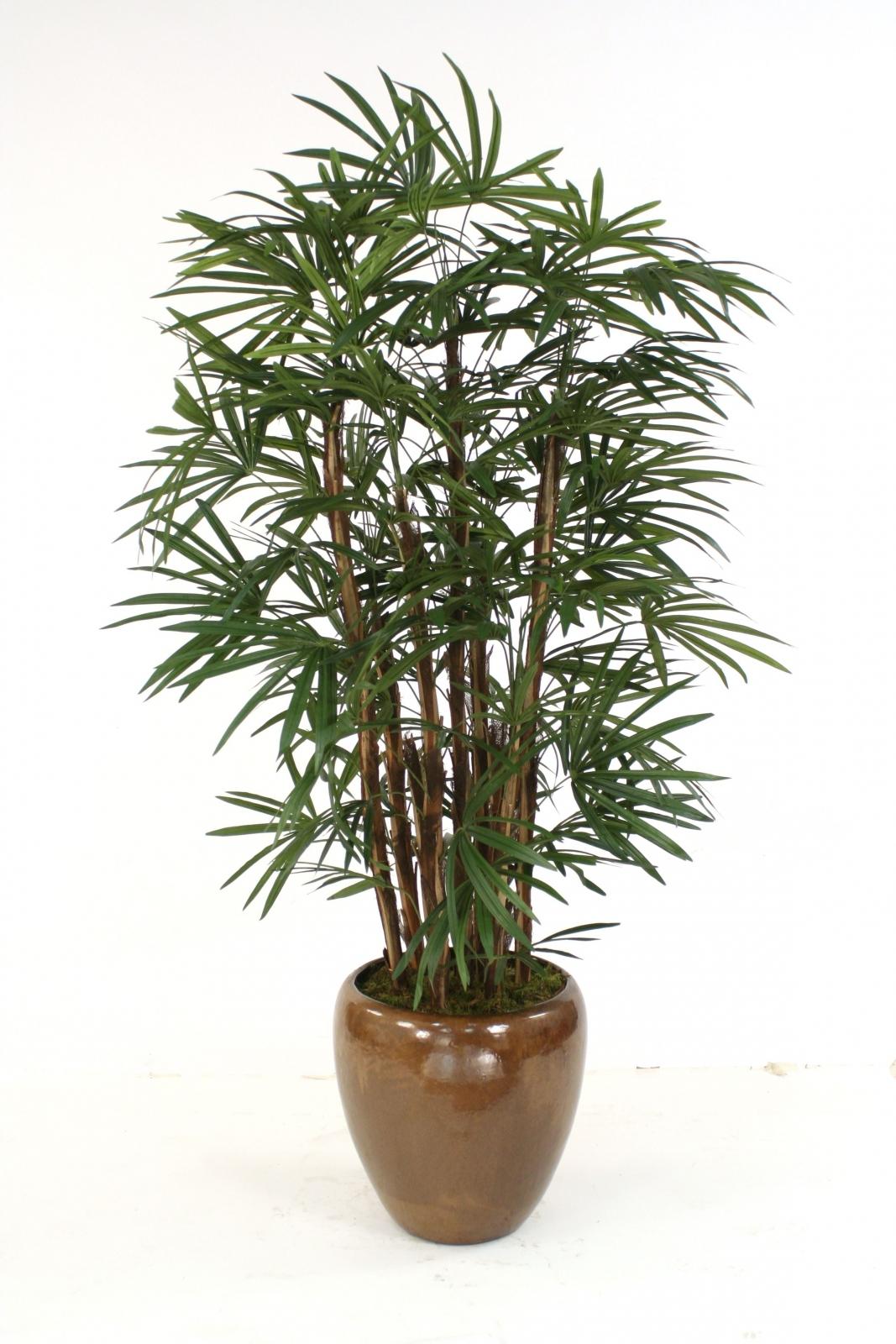 6 Lady Palm Tree In Medium Glazed Mocha Modern Stoneware