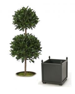5' Sweet Bay Laurel Double Topiary in Square Wood Planter with Finials