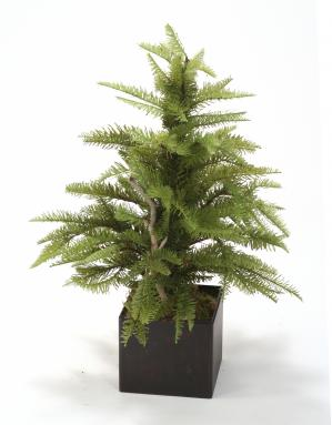 Silk Fir Tree in Small Antique Brown Box