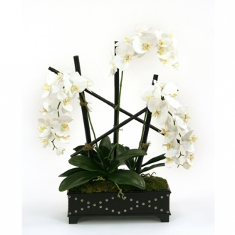 Silk Cream-White Phalaenopsis Orchids in a Black Leather Finish Box with Studs