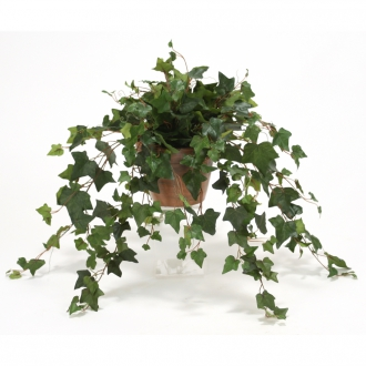 Silk Mountain Ivy in 6' Stained Clay Pot (Pack of 2)
