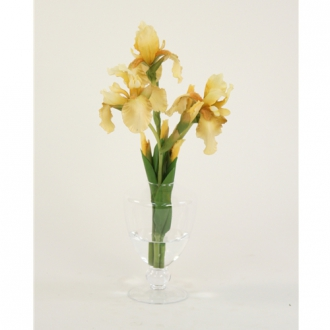 Waterlook ® Light Yellow Bearded Iris in Glass Urn