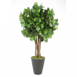 Fiddle Leaf Tree in Planter